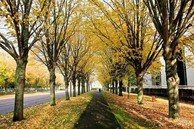 Canaldumidi Toulouse Trees Autumn - bomhehe100 / Pixabay